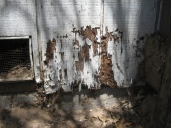Pictured: severe termite damage.  Photo credit: Wikipedia Commons
